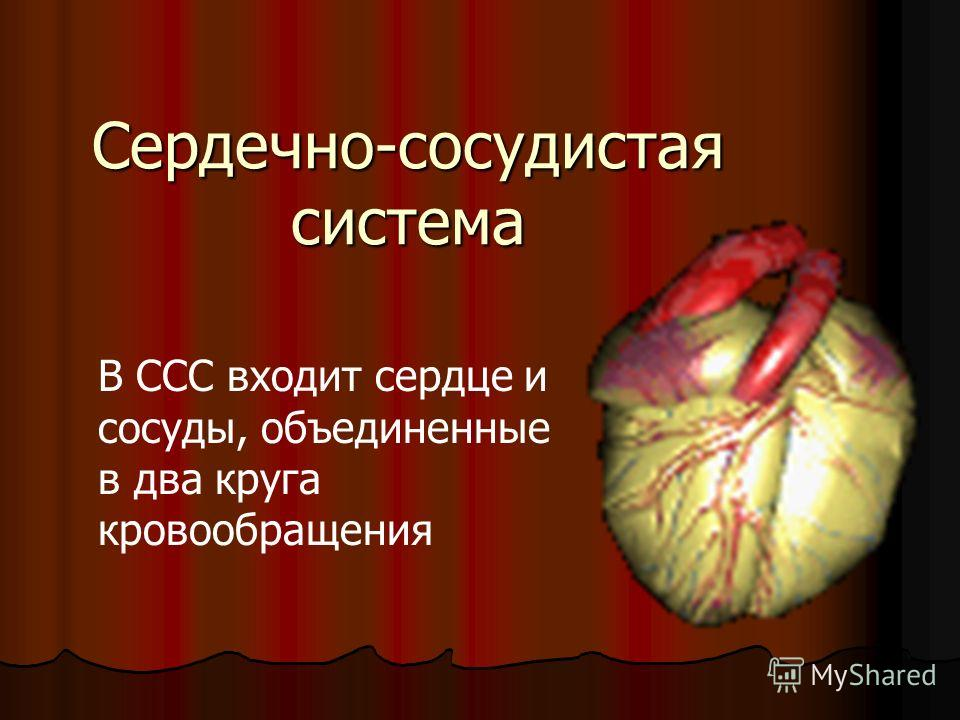Сердечно-сосудистая система В ССС входит сердце и сосуды, объединенные в два круга кровообращения