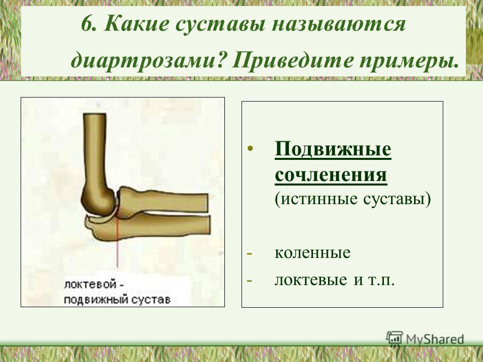 6. Какие суставы называются диартрозами? Приведите примеры. Подвижные сочленения (истинные суставы) -коленные -локтевые и т.п.