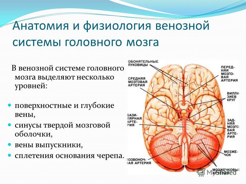 системы головного мозга В