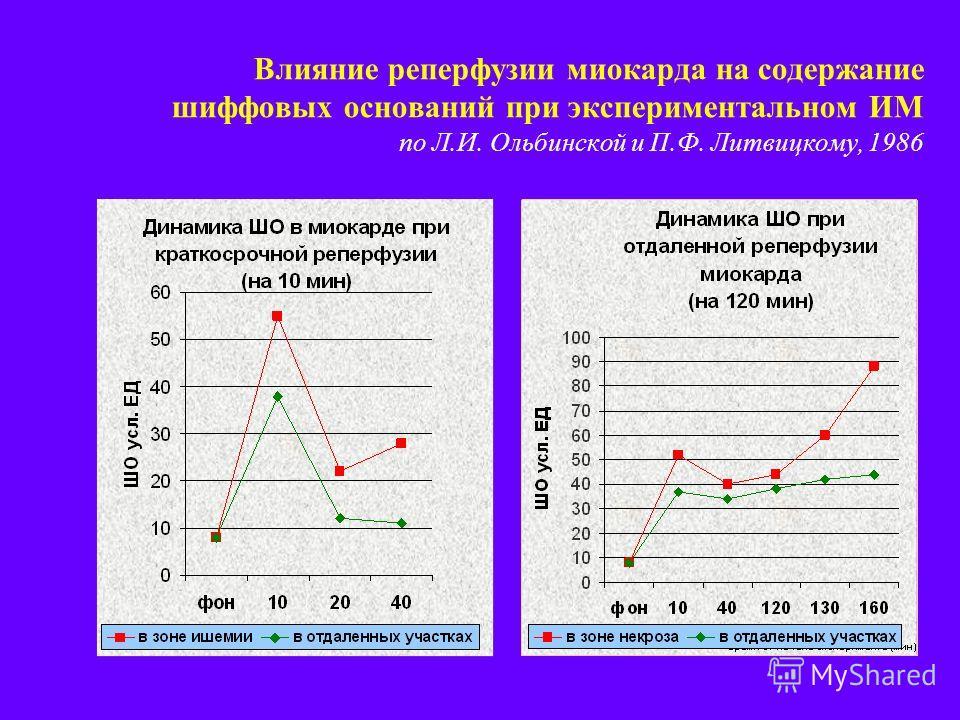 Влияние реперфузии миокарда на содержание шиффовых оснований при экспериментальном ИМ по Л.И. Ольбинской и П.Ф. Литвицкому, 1986