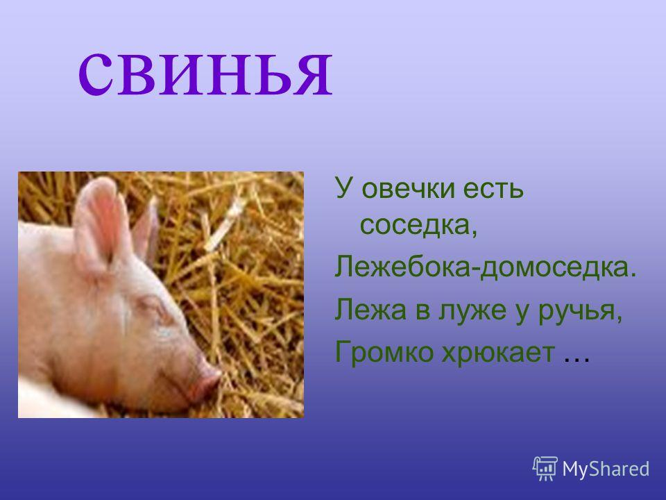 свинья У овечки есть соседка, Лежебока-домоседка. Лежа в луже у ручья, Громко хрюкает …