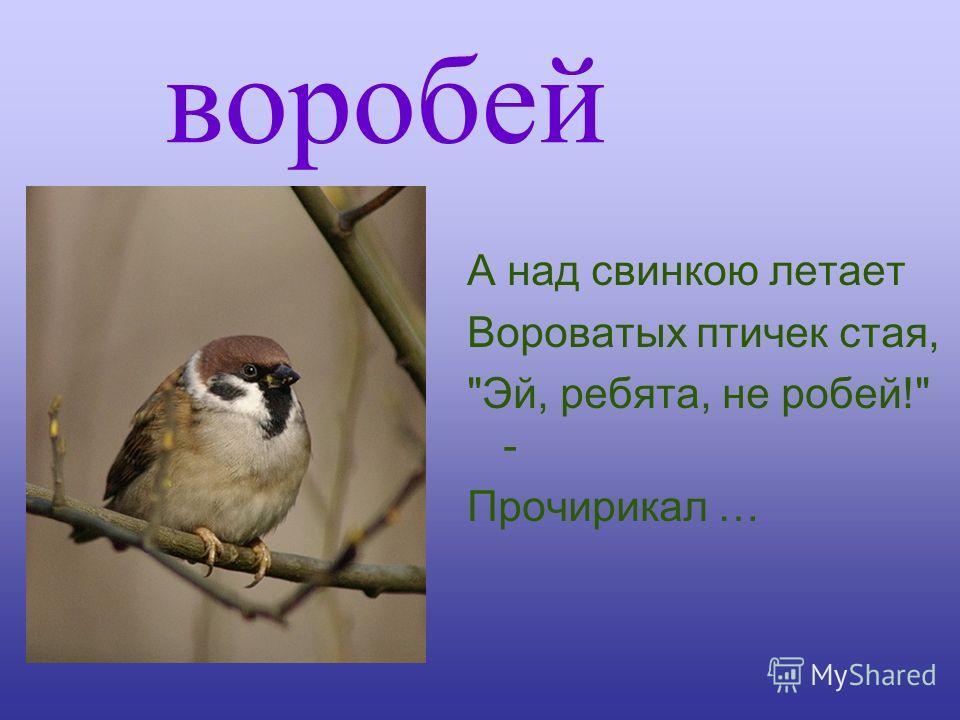 воробей А над свинкою летает Вороватых птичек стая, Эй, ребята, не робей! - Прочирикал …