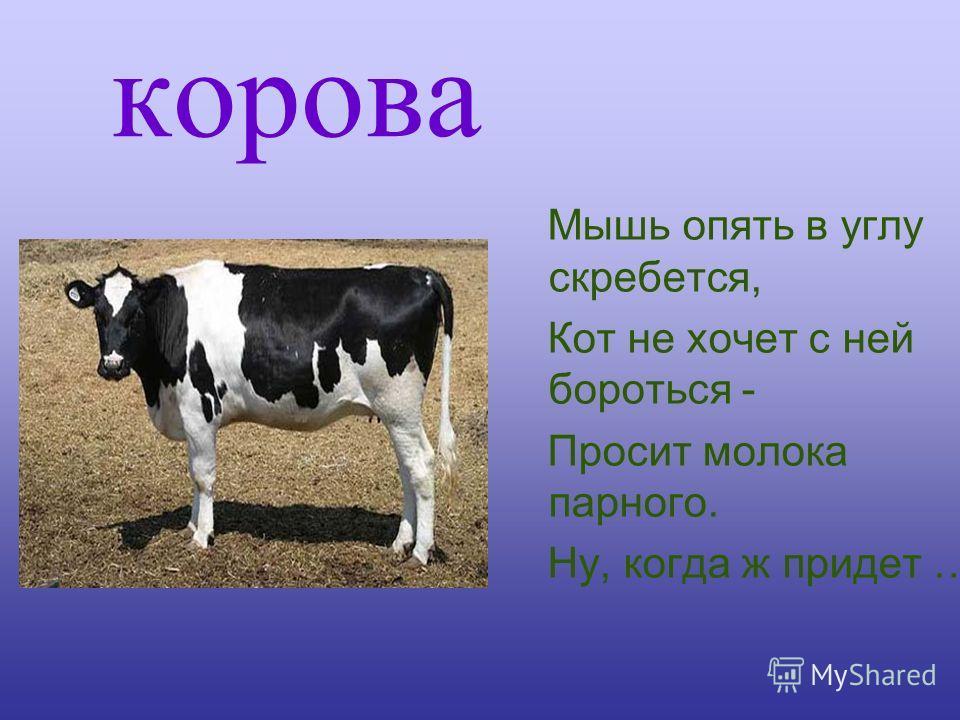 корова Мышь опять в углу скребется, Кот не хочет с ней бороться - Просит молока парного. Ну, когда ж придет …
