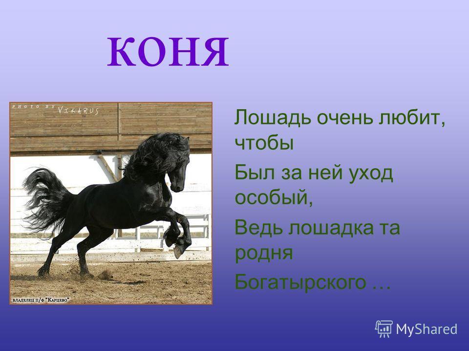 коня Лошадь очень любит, чтобы Был за ней уход особый, Ведь лошадка та родня Богатырского …