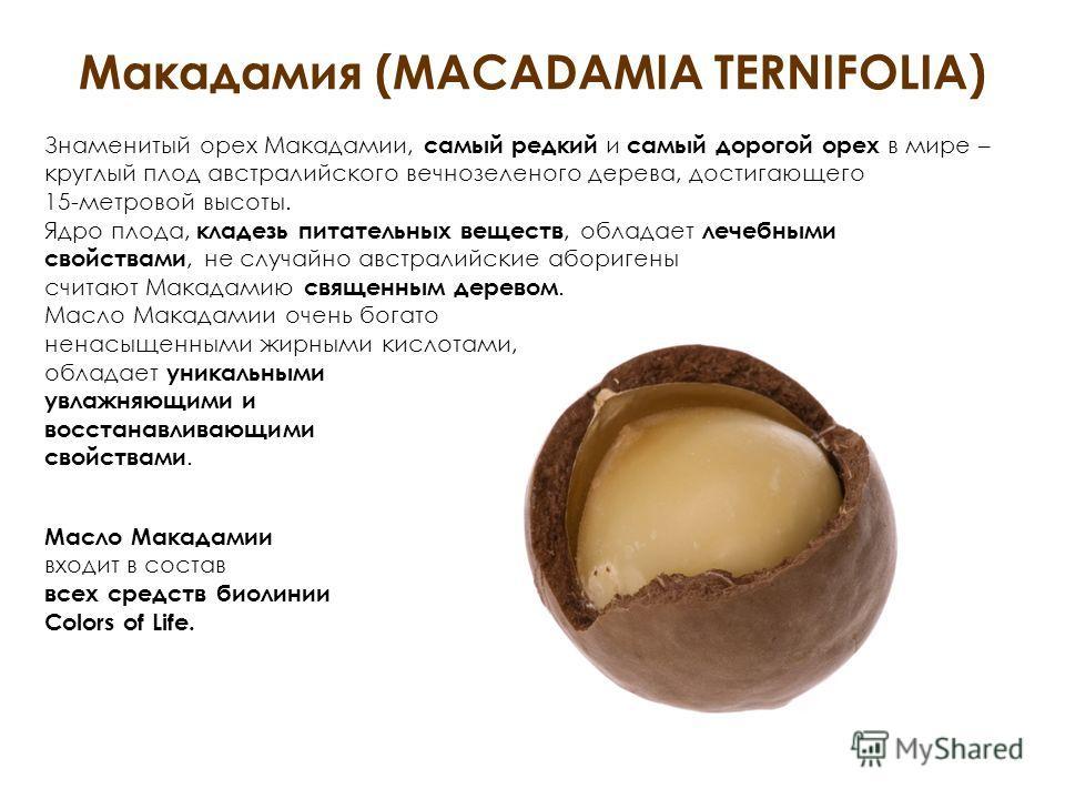 Макадамия (MACADAMIA TERNIFOLIA) Знаменитый орех Макадамии, самый редкий и самый дорогой орех в мире – круглый плод австралийского вечнозеленого дерева, достигающего 15-метровой высоты. Ядро плода, кладезь питательных веществ, обладает лечебными свой