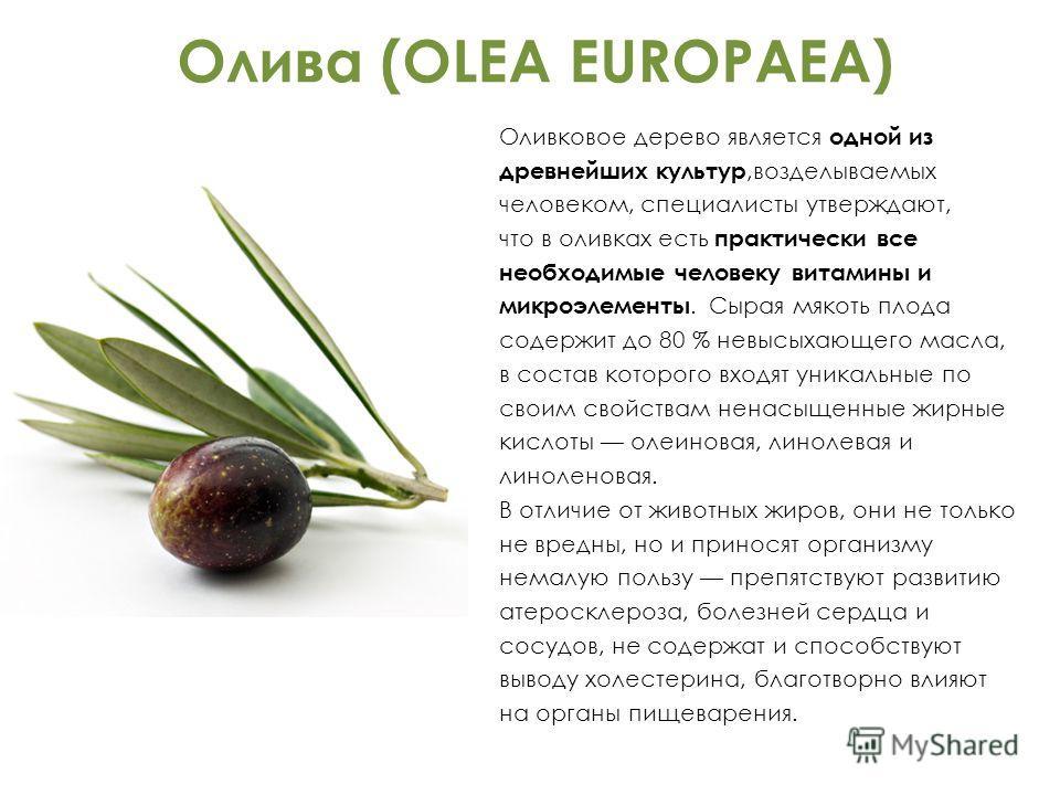 Олива (OLEA EUROPAEA) Оливковое дерево является одной из древнейших культур,возделываемых человеком, специалисты утверждают, что в оливках есть практически все необходимые человеку витамины и микроэлементы. Сырая мякоть плода содержит до 80 % невысых