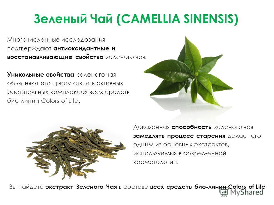 Зеленый Чай (CAMELLIA SINENSIS) Многочисленные исследования подтверждают антиоксидантные и восстанавливающие свойства зеленого чая. Уникальные свойства зеленого чая объясняют его присутствие в активных растительных комплексах всех средств био-линии C