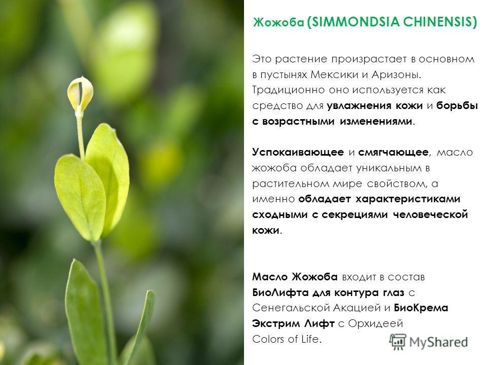 Жожоба (SIMMONDSIA CHINENSIS) Это растение произрастает в основном в пустынях Мексики и Аризоны. Традиционно оно используется как средство для увлажнения кожи и борьбы с возрастными изменениями. Успокаивающее и смягчающее, масло жожоба обладает уника