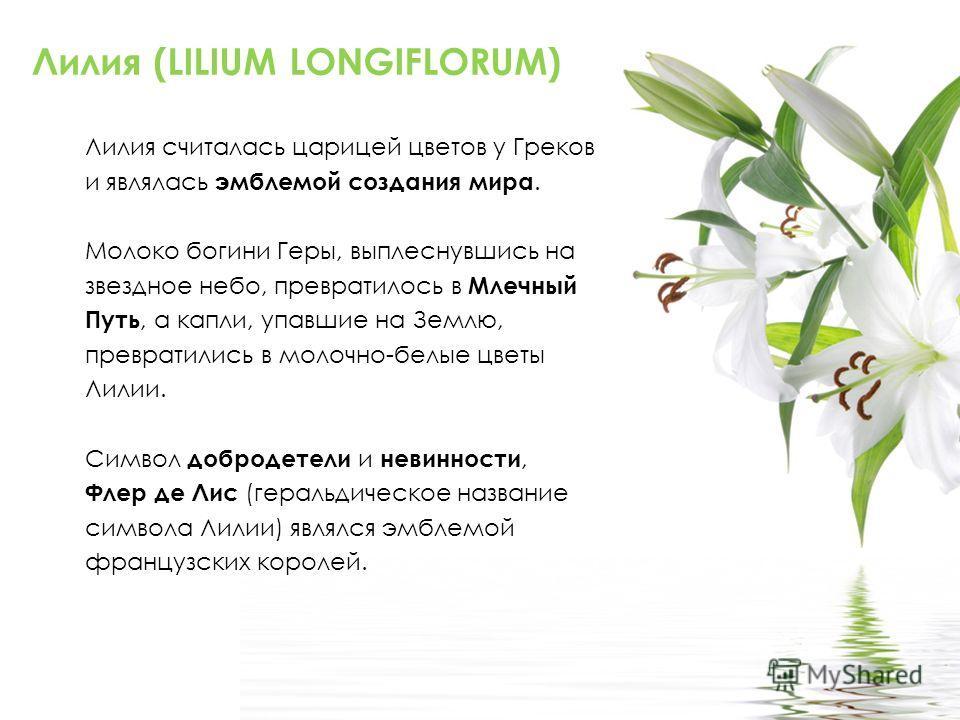 Лилия (LILIUM LONGIFLORUM) Лилия считалась царицей цветов у Греков и являлась эмблемой создания мира. Молоко богини Геры, выплеснувшись на звездное небо, превратилось в Млечный Путь, а капли, упавшие на Землю, превратились в молочно-белые цветы Лилии