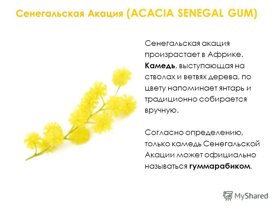 Сенегальская Акация (ACACIA SENEGAL GUM) Сенегальская акация произрастает в Африке. Камедь, выступающая на стволах и ветвях дерева, по цвету напоминает янтарь и традиционно собирается вручную.. Согласно определению, только камедь Сенегальской Акации