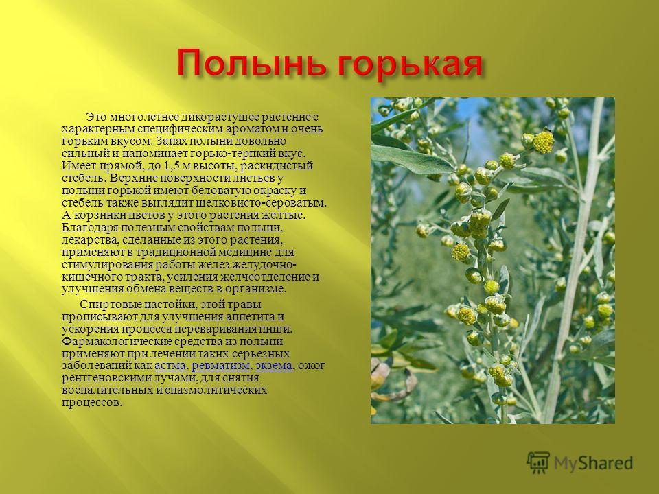 Это многолетнее дикорастущее растение с характерным специфическим ароматом и очень горьким вкусом. Запах полыни довольно сильный и напоминает горько - терпкий вкус. Имеет прямой, до 1,5 м высоты, раскидистый стебель. Верхние поверхности листьев у пол