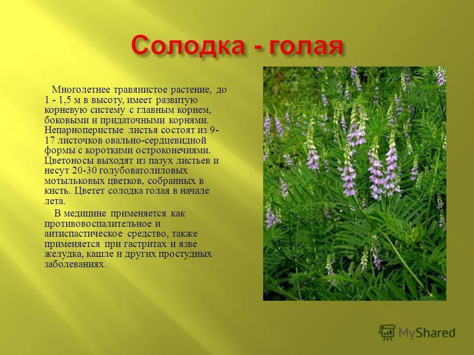 Многолетнее травянистое растение, до 1 - 1,5 м в высоту, имеет развитую корневую систему с главным корнем, боковыми и придаточными корнями. Непарноперистые листья состоят из 9- 17 листочков овально - сердцевидной формы с короткими остроконечиями. Цве