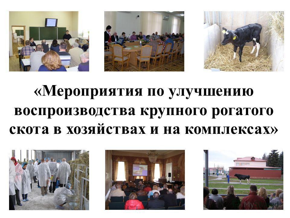 «Мероприятия по улучшению воспроизводства крупного рогатого скота в хозяйствах и на комплексах»