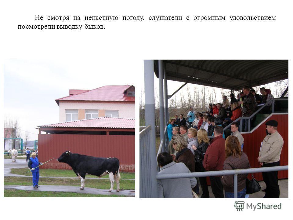 Не смотря на ненастную погоду, слушатели с огромным удовольствием посмотрели выводку быков.