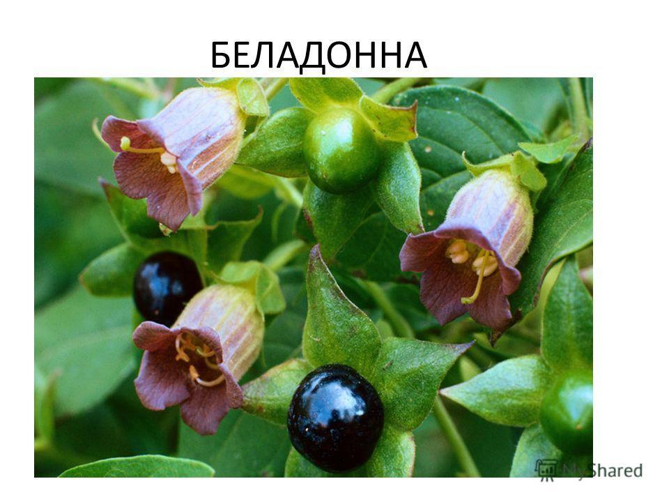 Константин Сомов Война ускоренная жизнь  Война