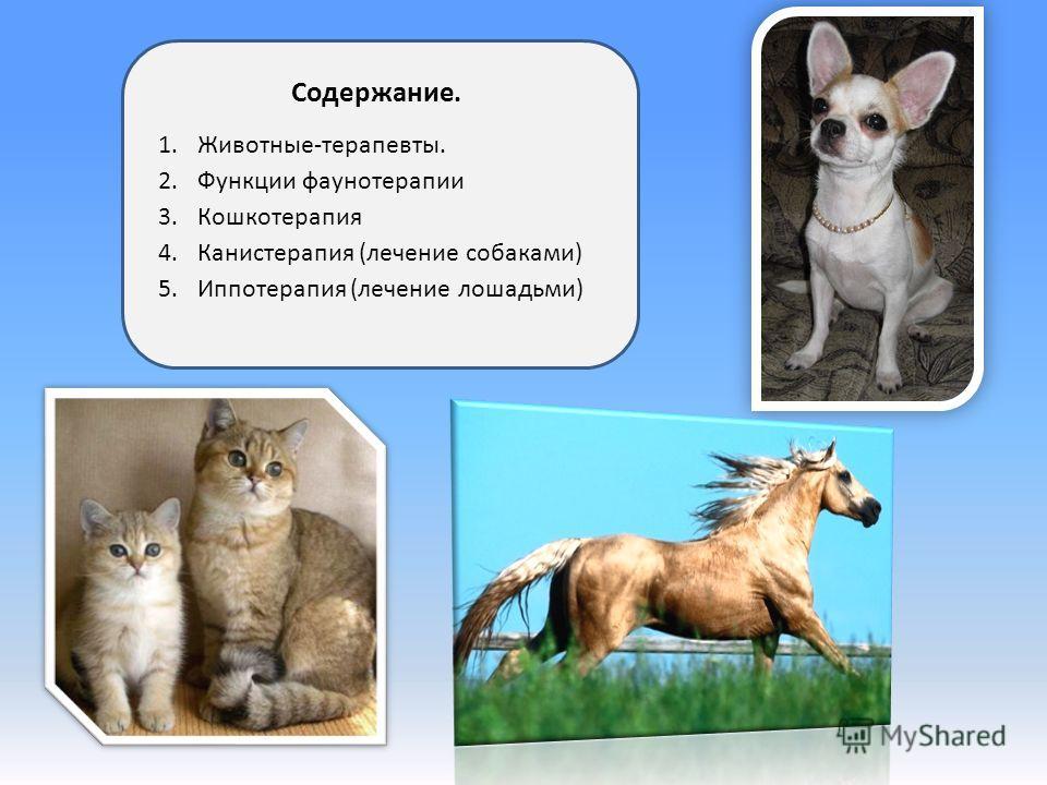 Содержание. 1.Животные-терапевты. 2.Функции фаунотерапии 3.Кошкотерапия 4.Канистерапия (лечение собаками) 5.Иппотерапия (лечение лошадьми)