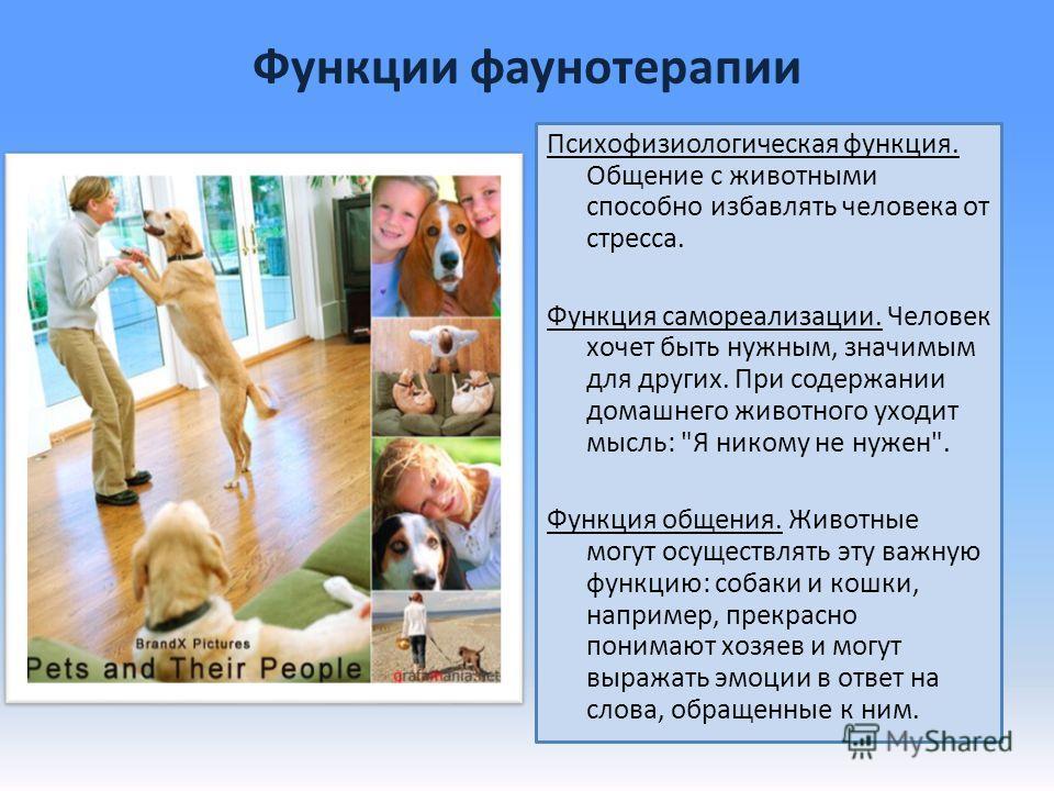 Функции фаунотерапии Психофизиологическая функция. Общение с животными способно избавлять человека от стресса. Функция самореализации. Человек хочет быть нужным, значимым для других. При содержании домашнего животного уходит мысль: