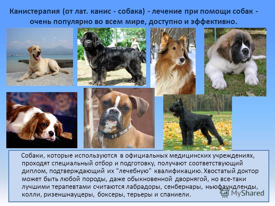 Канистерапия (от лат. канис - собака) - лечение при помощи собак - очень популярно во всем мире, доступно и эффективно. Собаки, которые используются в официальных медицинских учреждениях, проходят специальный отбор и подготовку, получают соответствую