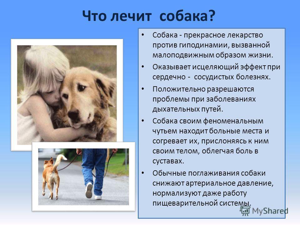 Что лечит собака? Собака - прекрасное лекарство против гиподинамии, вызванной малоподвижным образом жизни. Оказывает исцеляющий эффект при сердечно - сосудистых болезнях. Положительно разрешаются проблемы при заболеваниях дыхательных путей. Собака св