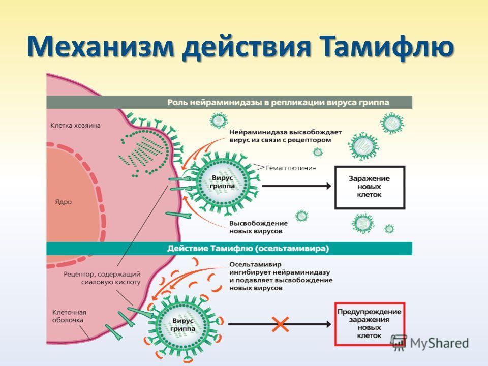 Механизм действия Тамифлю