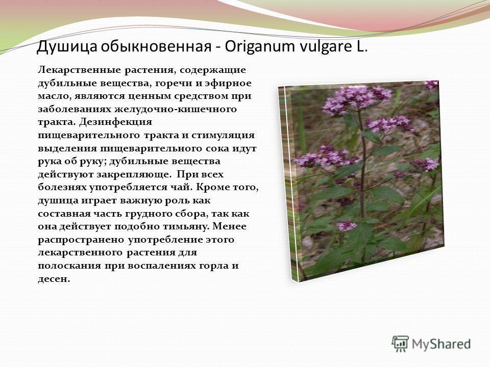 Душица обыкновенная - Origanum vulgare L. Лекарственные растения, содержащие дубильные вещества, горечи и эфирное масло, являются ценным средством при заболеваниях желудочно-кишечного тракта. Дезинфекция пищеварительного тракта и стимуляция выделения