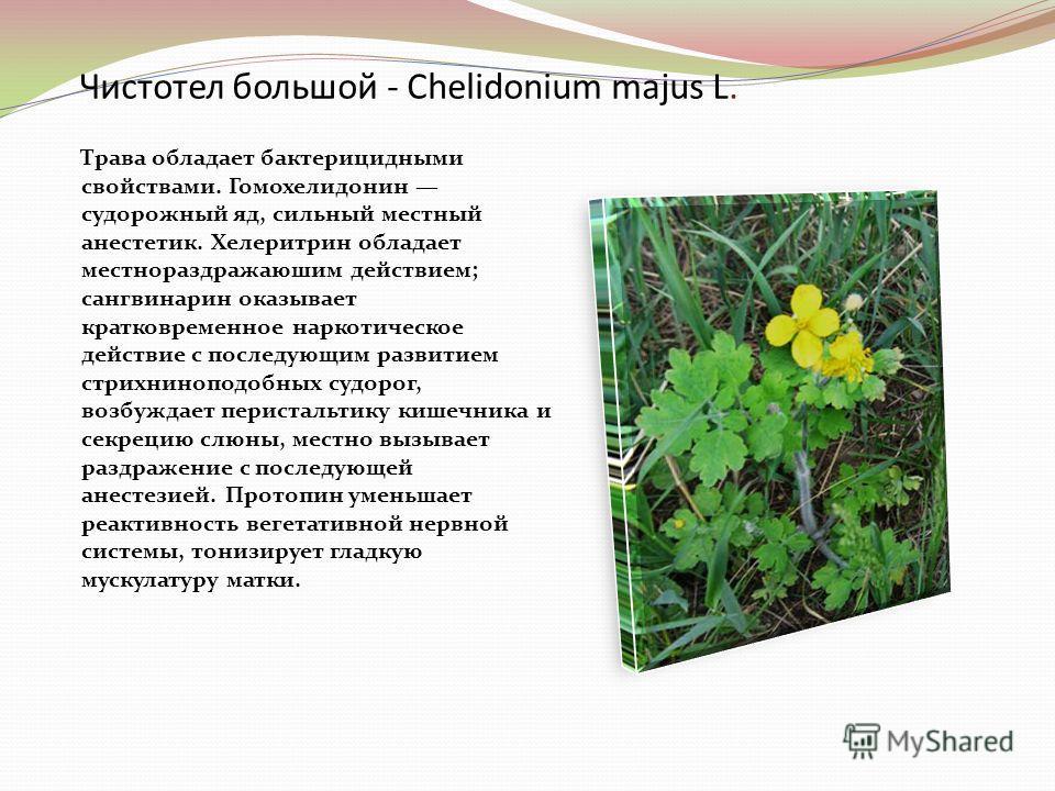 Чистотел большой - Chelidonium majus L. Трава обладает бактерицидными свойствами. Гомохелидонин судорожный яд, сильный местный анестетик. Хелеритрин обладает местнораздражаюшим действием; сангвинарин оказывает кратковременное наркотическое действие с