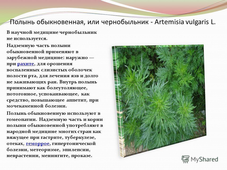 Полынь обыкновенная, или чернобыльник - Artemisia vuIgaris L. В научной медицине чернобыльник не используется. Надземную часть полыни обыкновенной применяют в зарубежной медицине: наружно при рахите, для орошения воспаленных слизистых оболочек полост