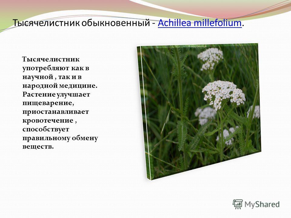 Тысячелистник обыкновенный - Achillea millefolium.Achillea millefolium Тысячелистник употребляют как в научной, так и в народной медицине. Растение улучшает пищеварение, приостанавливает кровотечение, способствует правильному обмену веществ.