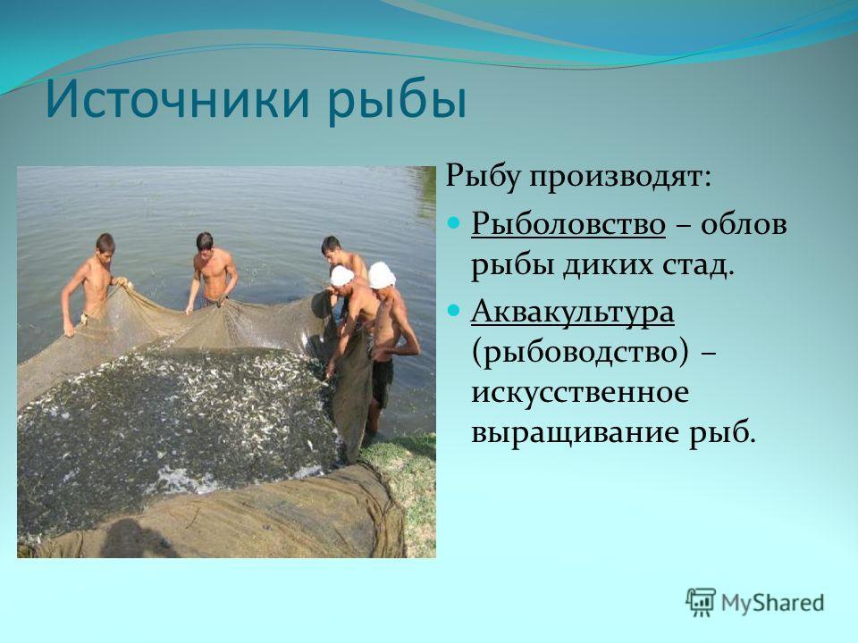 Источники рыбы Рыбу производят: Рыболовство – облов рыбы диких стад. Аквакультура (рыбоводство) – искусственное выращивание рыб.