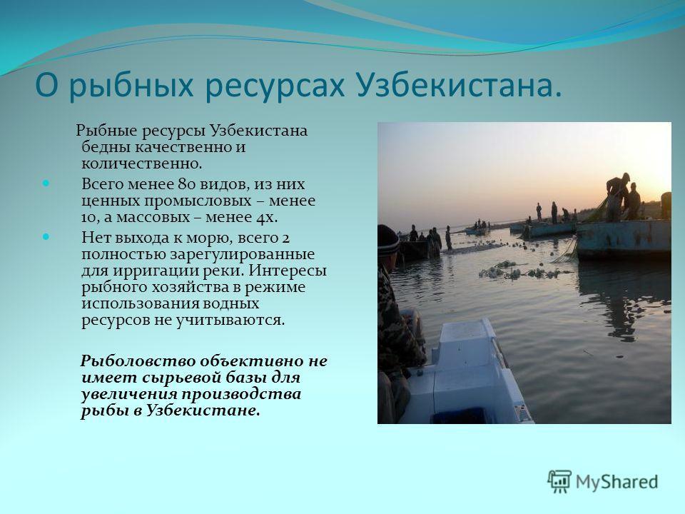 О рыбных ресурсах Узбекистана. Рыбные ресурсы Узбекистана бедны качественно и количественно. Всего менее 80 видов, из них ценных промысловых – менее 10, а массовых – менее 4х. Нет выхода к морю, всего 2 полностью зарегулированные для ирригации реки.