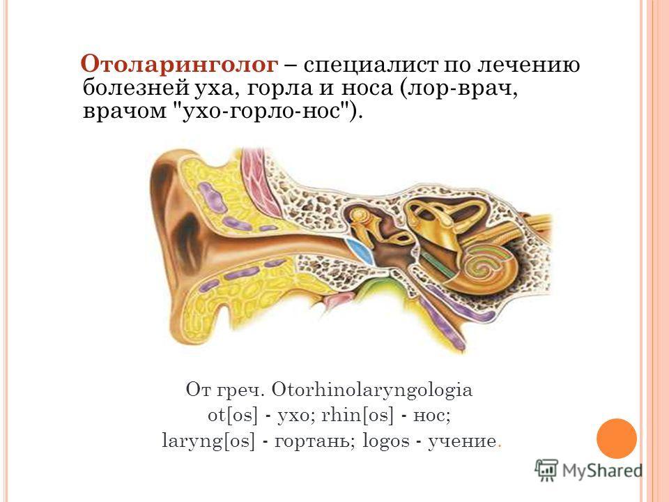 Отоларинголог – специалист по лечению болезней уха, горла и носа (лор-врач, врачом ухо-горло-нос). От греч. Otorhinolaryngologia ot[os] - ухо; rhin[os] - нос; laryng[os] - гортань; logos - учение.