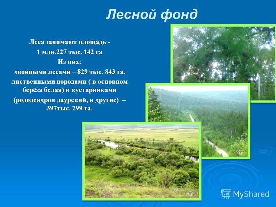 Лесной фонд Леса занимают площадь - 1 млн.227 тыс. 142 га Из них: хвойными лесами – 829 тыс. 843 га. лиственными породами ( в основном берёза белая) и кустарниками (рододендрон даурский, и другие) – 397тыс. 299 га.