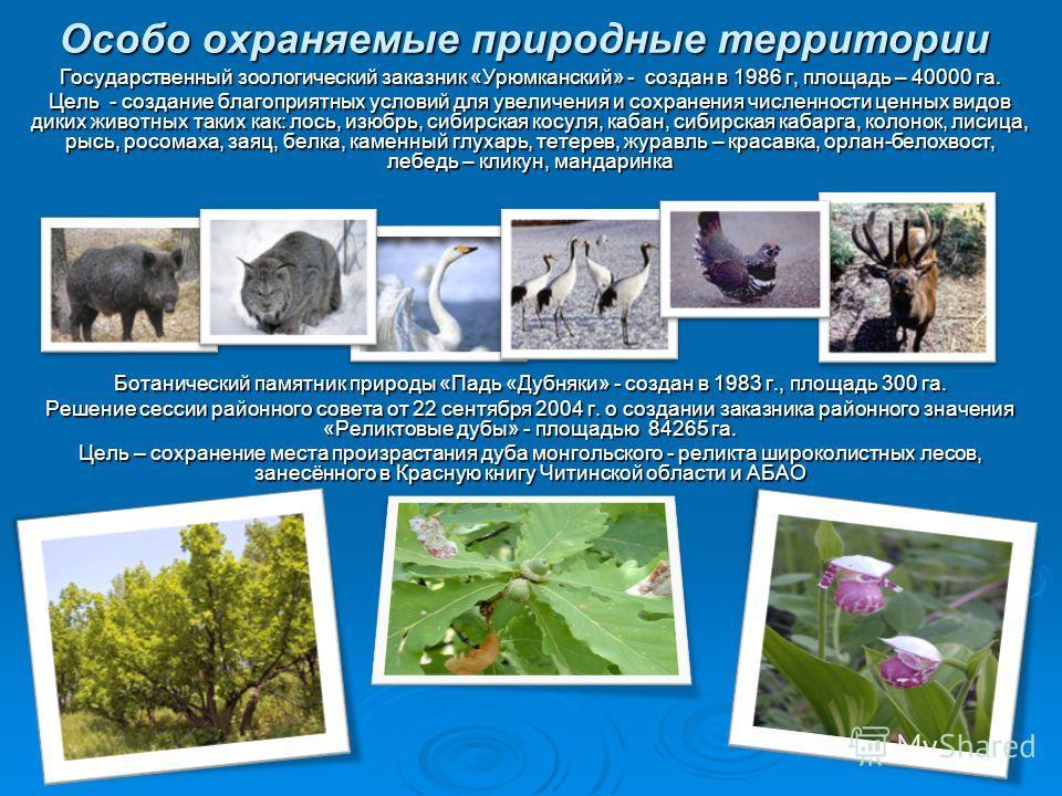 Особо охраняемые природные территории Государственный зоологический заказник «Урюмканский» - создан в 1986 г, площадь – 40000 га. Цель - создание благоприятных условий для увеличения и сохранения численности ценных видов диких животных таких как: лос