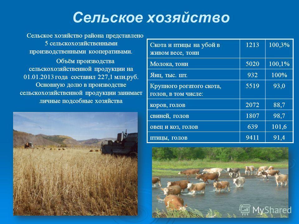 Сельское хозяйство Сельское хозяйство района представлено 5 сельскохозяйственными производственными кооперативами. Объём производства сельскохозяйственной продукции на 01.01.2013 года составил 227,1 млн.руб. Основную долю в производстве сельскохозяйс