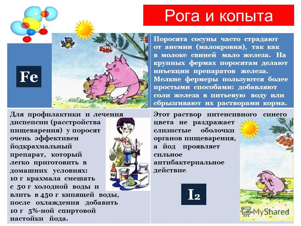 Рога и копыта Поросята сосуны часто страдают от анемии (малокровия), так как в молоке свиней мало железа. На крупных фермах поросятам делают инъекции препаратов железа. Мелкие фермеры пользуются более простыми способами: добавляют соли железа в питье