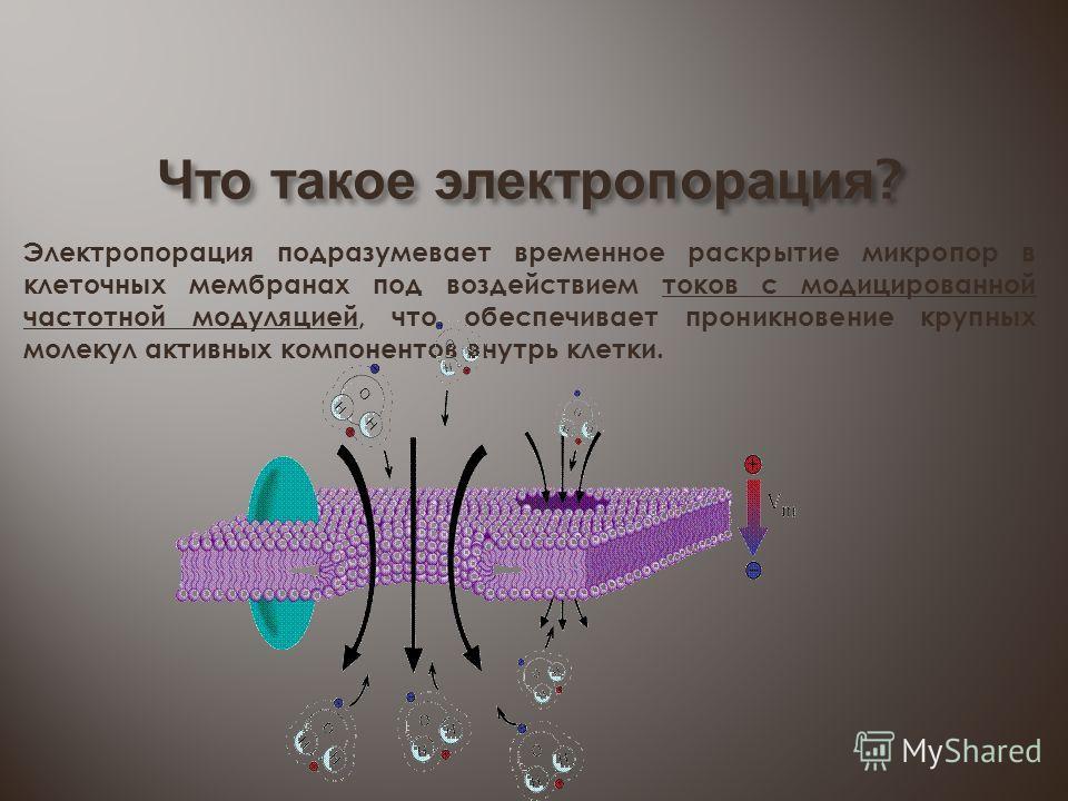 Что такое электропорация ? Электропорация подразумевает временное раскрытие микропор в клеточных мембранах под воздействием токов с модицированной частотной модуляцией, что обеспечивает проникновение крупных молекул активных компонентов внутрь клетки
