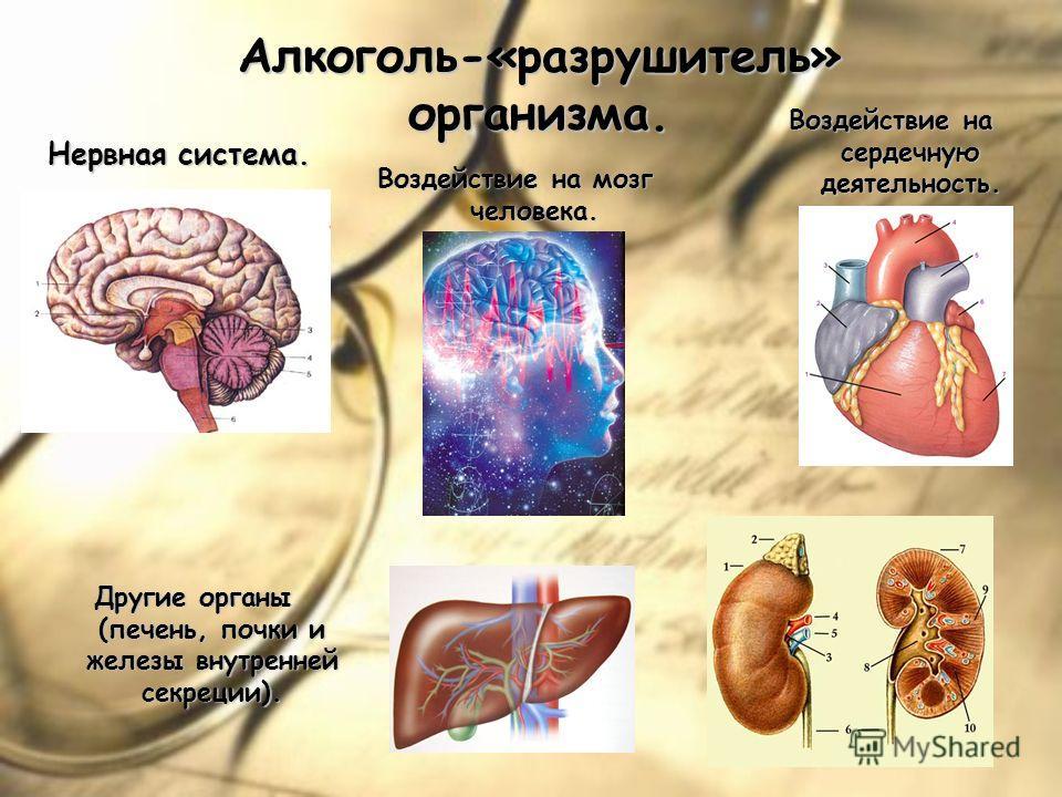 Алкоголь-«разрушитель» организма. Нервная система. Воздействие на мозг человека. Воздействие на сердечную деятельность. Другие органы (печень, почки и железы внутренней секреции).