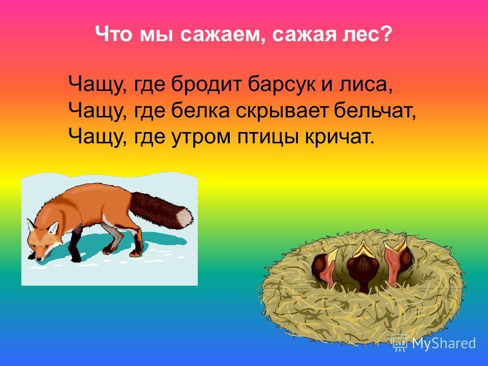 Что мы сажаем, сажая лес? Чащу, где бродит барсук и лиса, Чащу, где белка скрывает бельчат, Чащу, где утром птицы кричат.