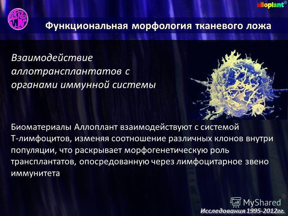 Функциональная морфология тканевого ложа Взаимодействие аллотрансплантатов с органами иммунной системы Биоматериалы Аллоплант взаимодействуют с системой Т-лимфоцитов, изменяя соотношение различных клонов внутри популяции, что раскрывает морфогенетиче