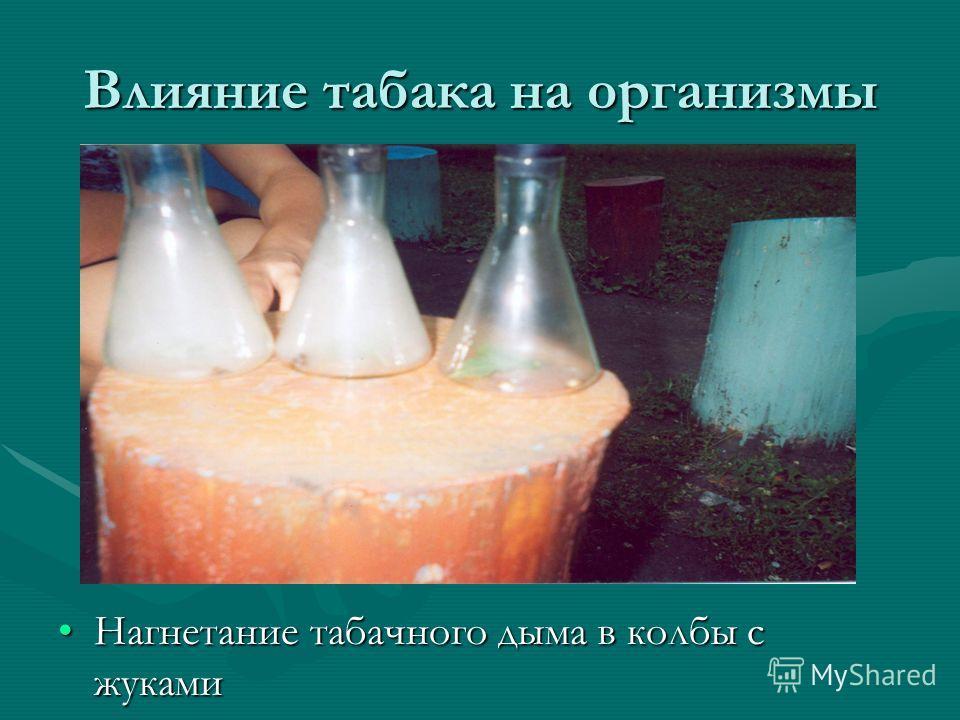 Влияние табака на организмы Нагнетание табачного дыма в колбы с жуками
