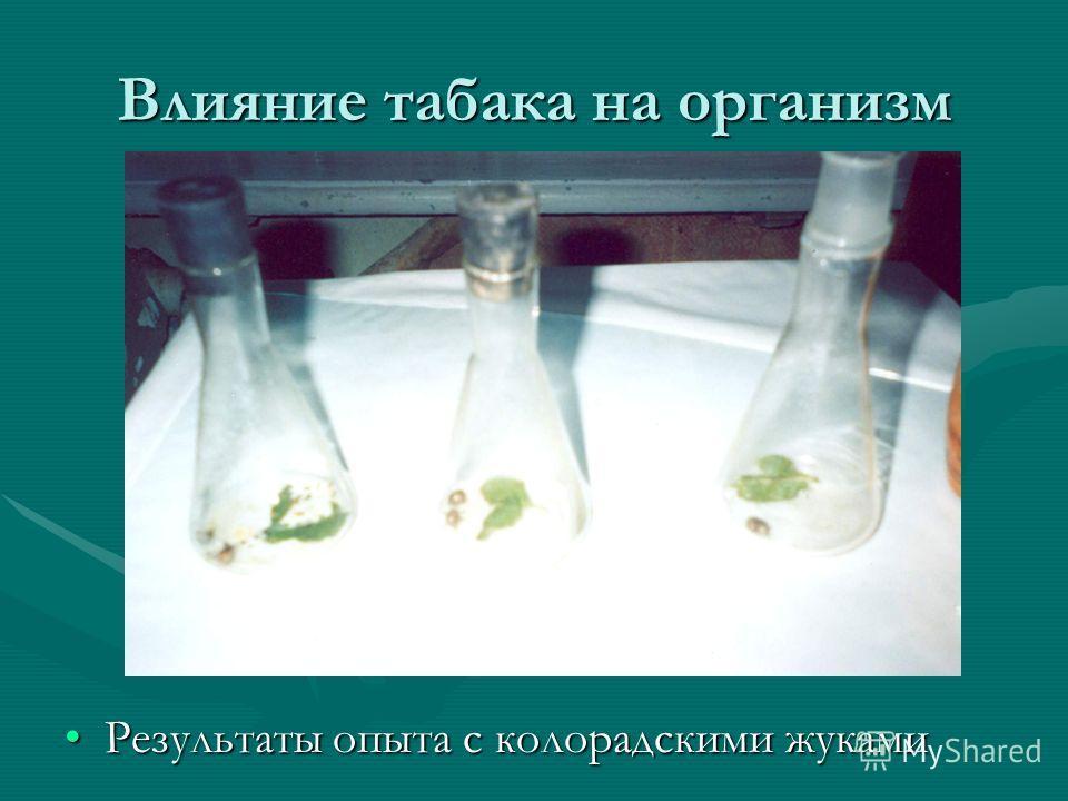 Влияние табака на организм Результаты опыта с колорадскими жуками
