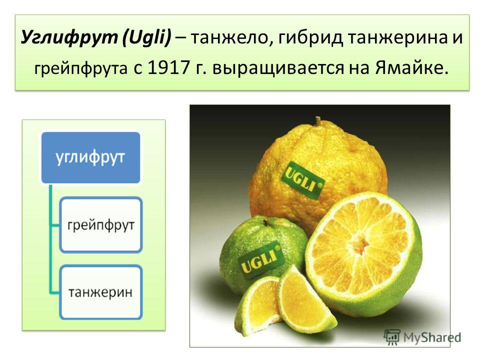 Углифрут (Ugli) – танжело, гибрид танжерина и грейпфрута с 1917 г. выращивается на Ямайке.