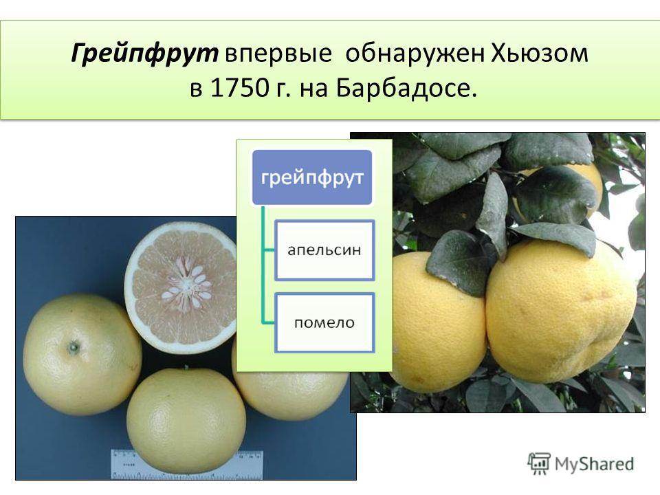 Грейпфрут впервые обнаружен Хьюзом в 1750 г. на Барбадосе.
