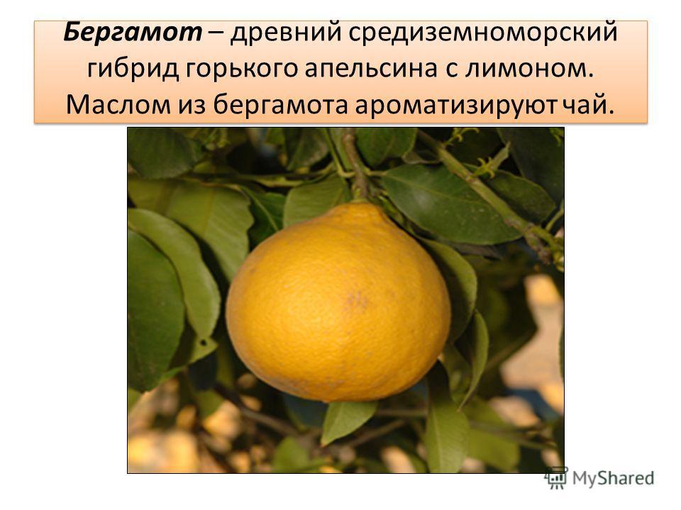Бергамот – древний средиземноморский гибрид горького апельсина с лимоном. Маслом из бергамота ароматизируют чай.