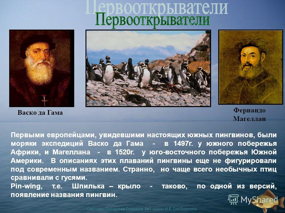 Сергиево-Посадская Гимназия 1 имени И.Б.Ольбинского Васко да Гама Фернандо Магеллан Первыми европейцами, увидевшими настоящих южных пингвинов, были моряки экспедиций Васко да Гама - в 1497г. у южного побережья Африки, и Магеллана - в 1520г. у юго-вос