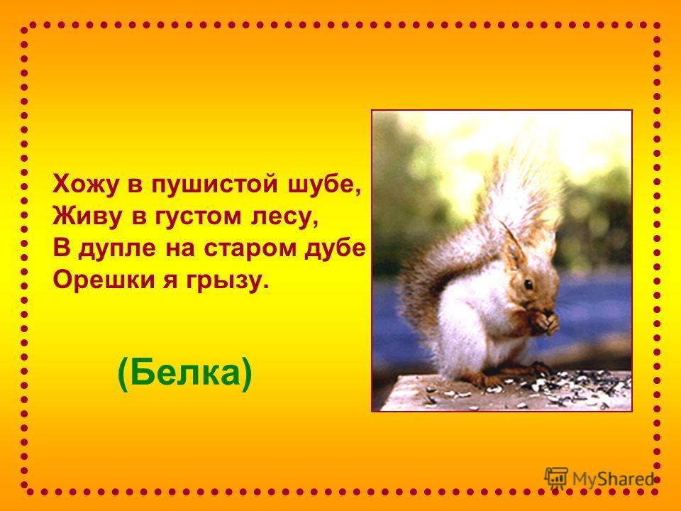 (Белка) Хожу в пушистой шубе, Живу в густом лесу, В дупле на старом дубе Орешки я грызу.