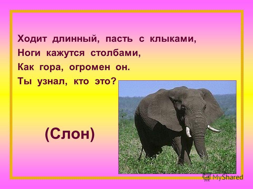 (Слон) Ходит длинный, пасть с клыками, Ноги кажутся столбами, Как гора, огромен он. Ты узнал, кто это?