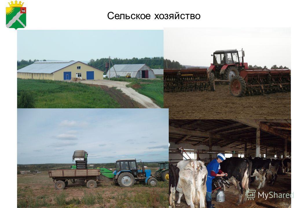 2 Сельское хозяйство