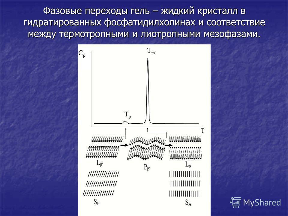 Фазовые переходы гель – жидкий кристалл в гидратированных фосфатидилхолинах и соответствие между термотропными и лиотропными мезофазами. TpTp TmTm CpCp