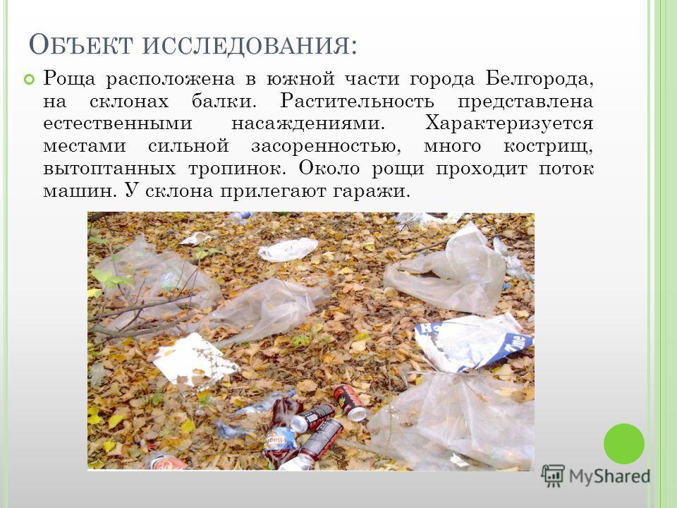 О БЪЕКТ ИССЛЕДОВАНИЯ : Роща расположена в южной части города Белгорода, на склонах балки. Растительность представлена естественными насаждениями. Характеризуется местами сильной засоренностью, много кострищ, вытоптанных тропинок. Около рощи проходит